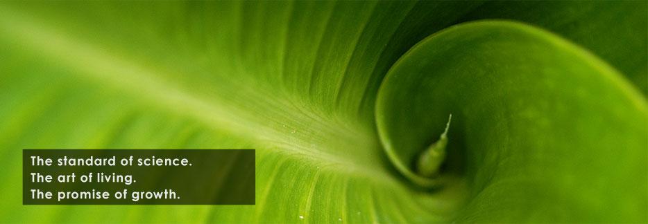 epsilon-leaf